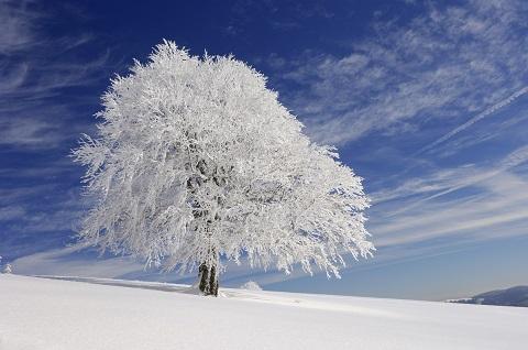 大雪警報の基準は?今から準備しておきたい大雪警報発令時の準備と対策