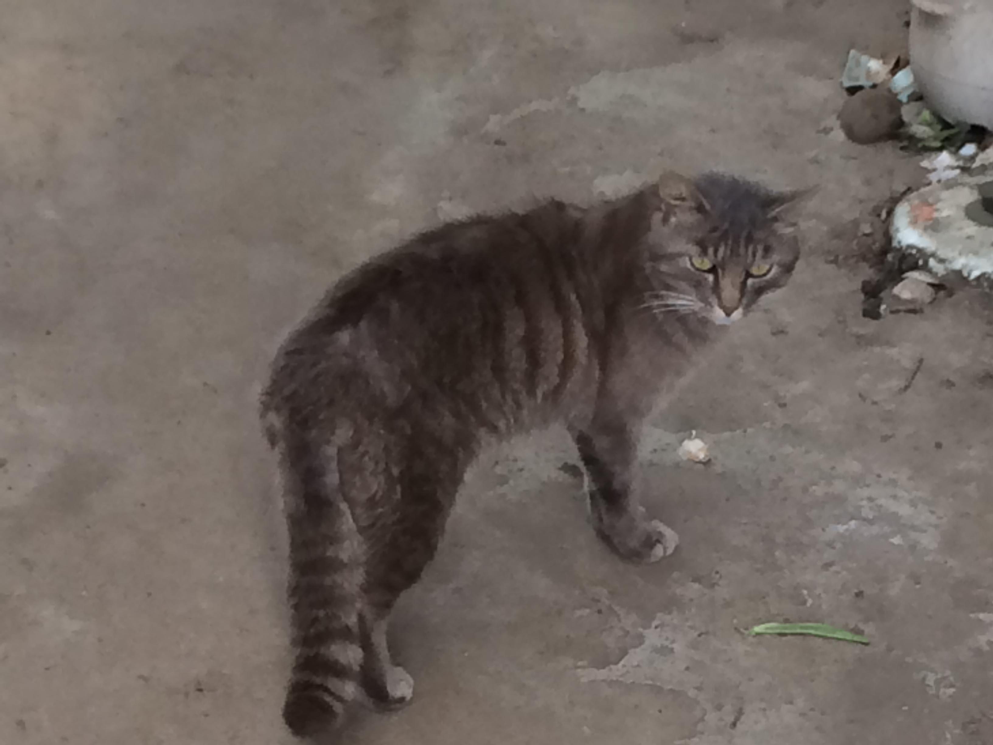 野良猫を飼う時に必要な準備は?
