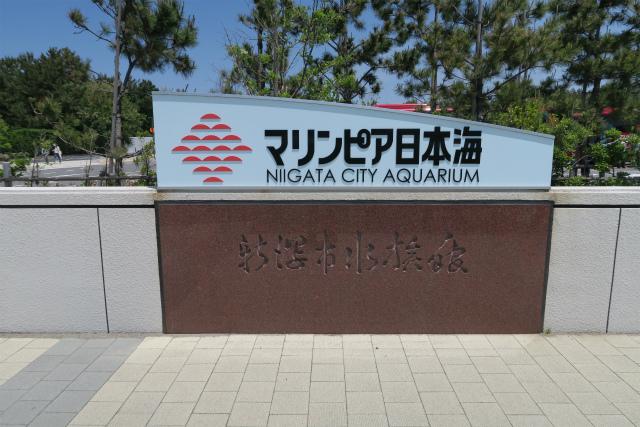 マリンピア日本海付近に行くならジェラート屋さんへ!理由はおすすめメニューにあり!