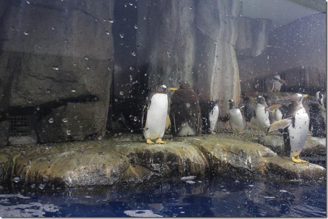 仙台うみの杜水族館の混雑状況の画像