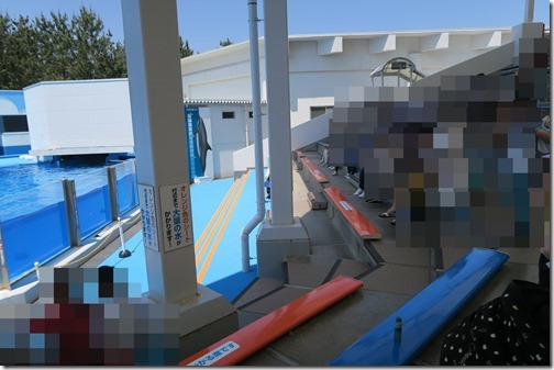 マリンピア日本海のイルカショーの画像