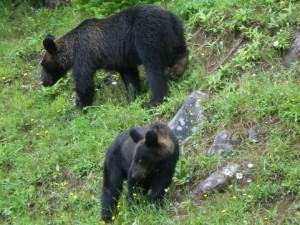 熊の出没地域に関する画像